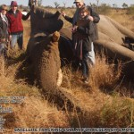 Africa Wildlife Conservation Elephant 4