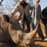 Africa Wildlife Conservation Rhino