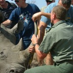 Africa Wildlife Conservation Rhino 7