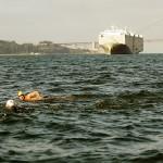 Alcatraz Swim 5