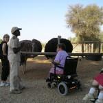 South Africa - Ostrich Farm