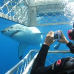 Photographing Jaws
