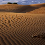 Sandhill Patterns